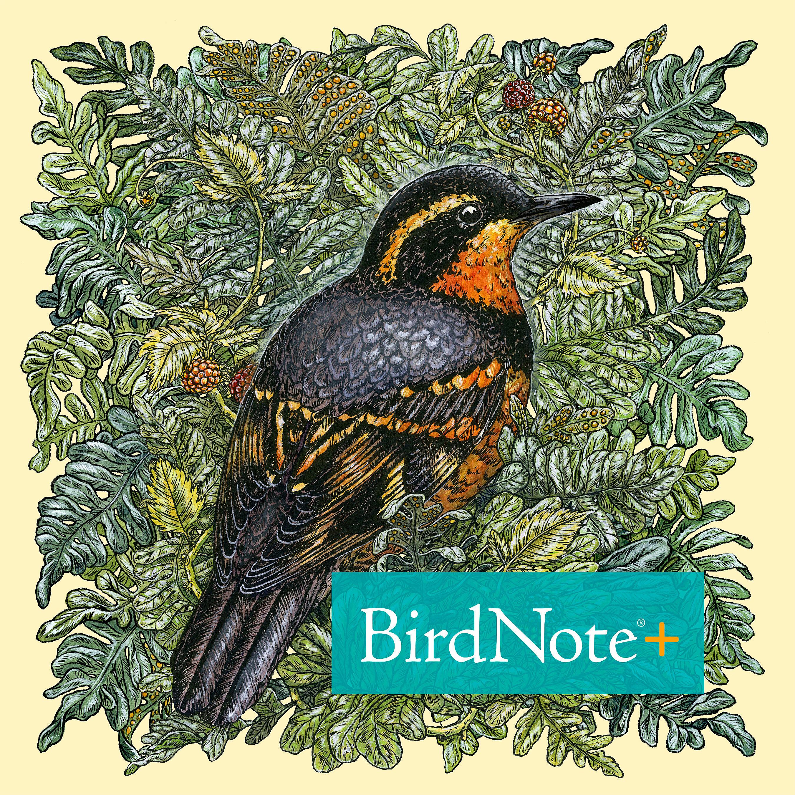 BirdNote Daily+